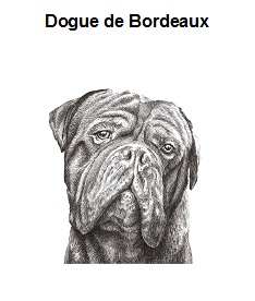 Dog de Bordeaux